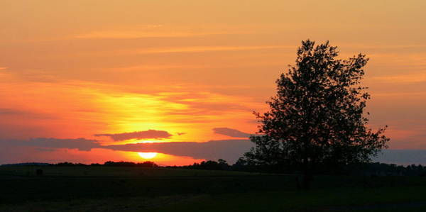 Photograph - Landscape Photograph Of A Fiery Orange Sunset And Tree Silhouette by Angela Rath