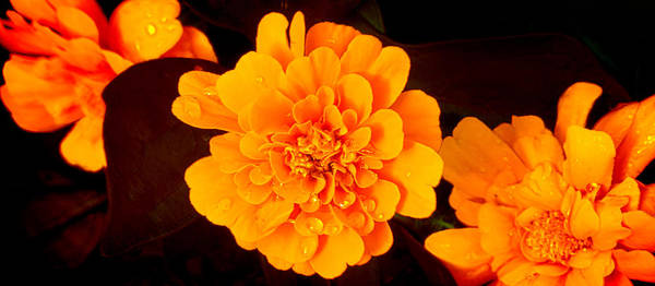 Photograph - Orange Beauty by Milena Ilieva
