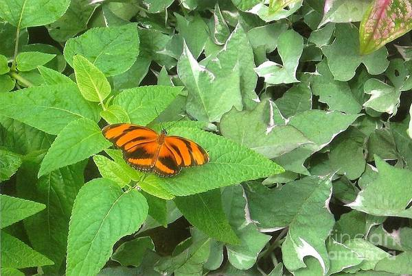 Photograph - Orange Butterfly by Charles Robinson