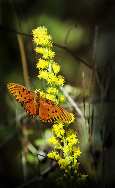 Wall Art - Photograph - Orange Butterfly On Yellow Wildflower by Carolyn Marshall