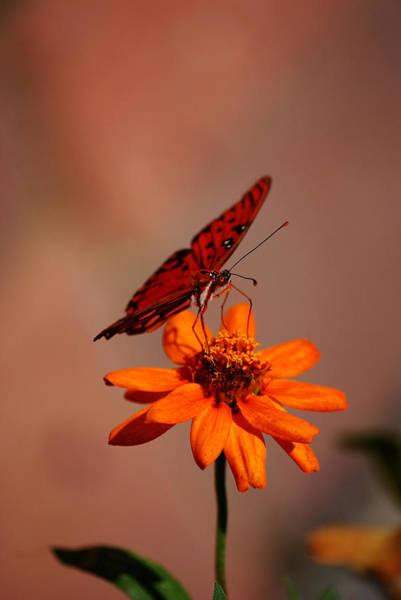 Orange Butterfly Orange Flower Art Print