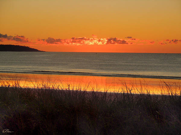 Photograph - Orange By The Sea by Nancy Griswold