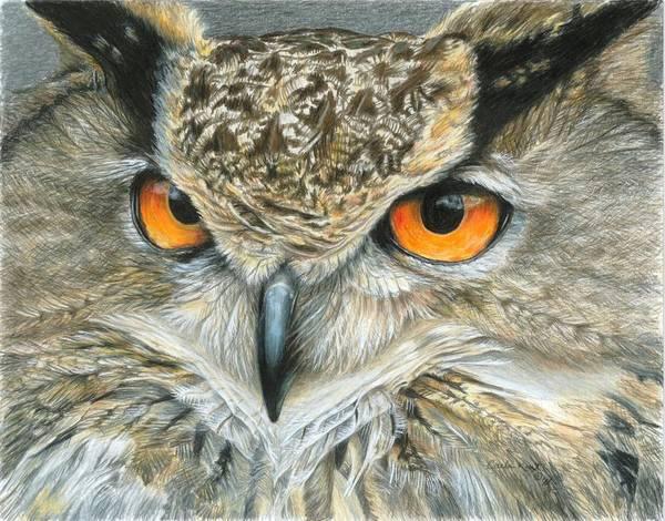 Colored Pencil Drawings Painting - Orange-eyed Owl by Carla Kurt