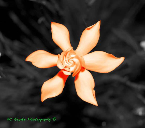 Orange Gardenia Bonsai Art Print by Adam Hopke