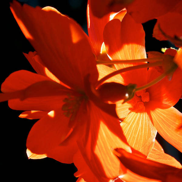 Photograph - Orange Glow by Trever Miller