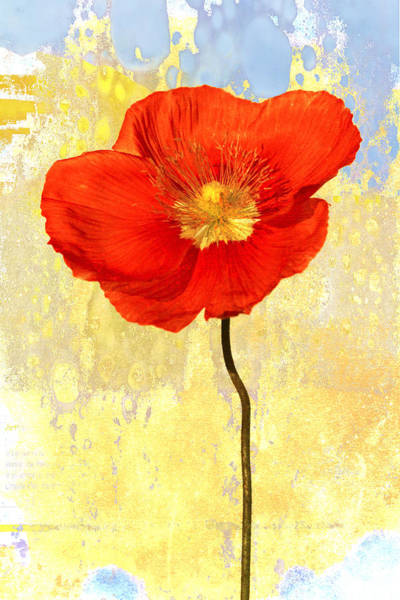 Striking Wall Art - Photograph - Orange Iceland Poppy On Yellow And Blue by Carol Leigh