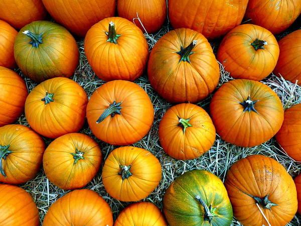 Photograph - Orange Pumpkin Tops by Jeff Lowe