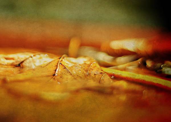 Photograph - Orange by Rebecca Sherman