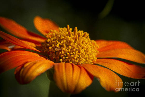 Photograph - Orange Splash by Clare Bambers