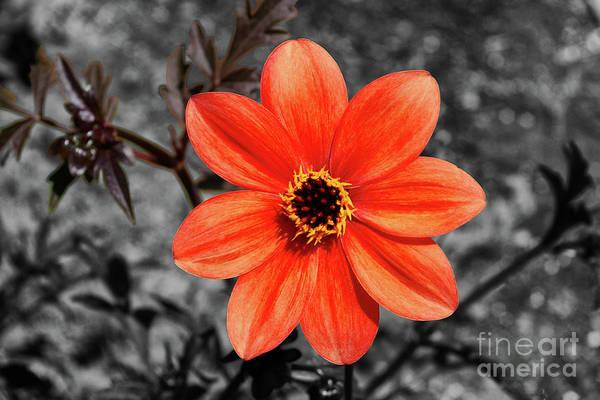 Mission Viejo Photograph - Orange Sunshine by Mariola Bitner
