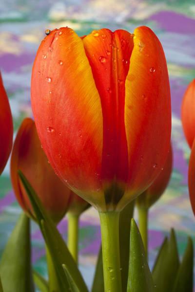 Purple Tulip Photograph - Orange Tulip Close Up by Garry Gay