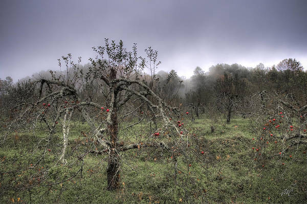 Orchard At Altapass Art Print by Williams-Cairns Photography LLC