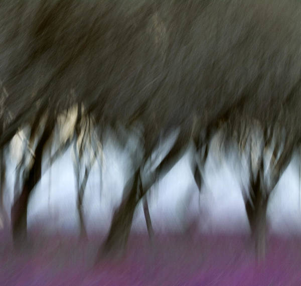 Impressionist Photograph - Orchard In Springtime by Carol Leigh