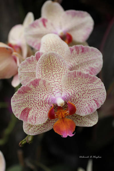 Photograph - Orchid Perspective by Deborah Hughes