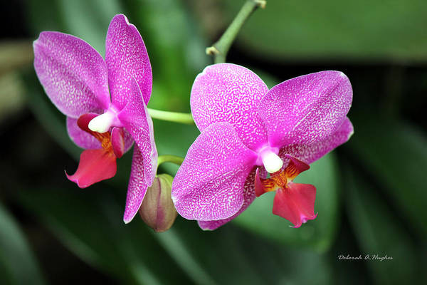 Orchid Purple Art Print