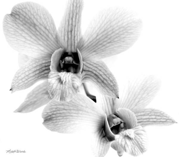 Photograph - Orchid Study 1 by Michelle Constantine