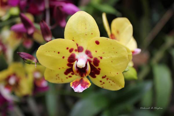 Photograph - Orchid Tie Dye by Deborah Hughes