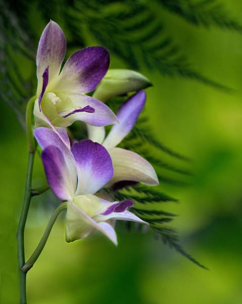 Wall Art - Photograph - Orchid With Ferns by Don Schroder