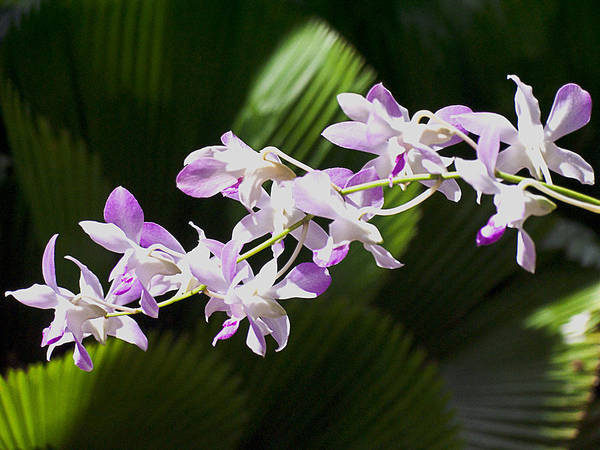 Photograph - Orchids 1 by Tony and Kristi Middleton