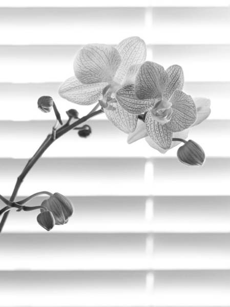 Wall Art - Photograph - Orchids By My Window by Tony Ramos