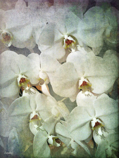 Photograph - Orchids by Eena Bo