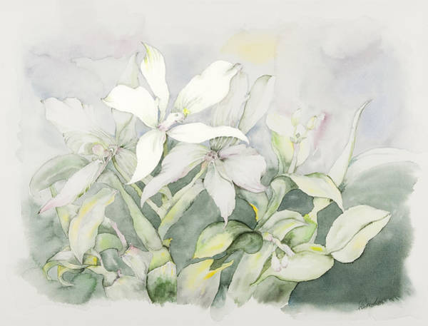 Tulipan Painting - Orchids by Pam Munn