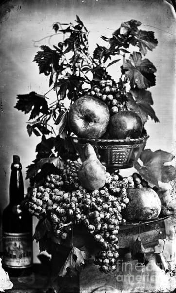 Photograph - Oregon: Wine & Grapes by Granger