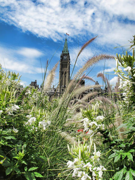 Photograph - Ornamental Grasses And White Flowers Under Clouds And Blue Sky - Parliament Hill - Canada by Chantal PhotoPix