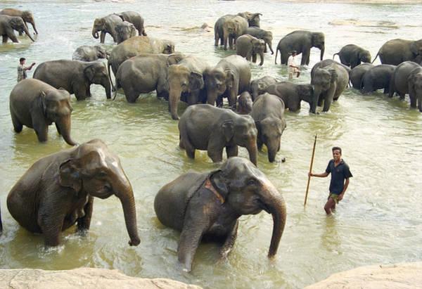 Photograph - Orphaned Elephants by Paul Cowan