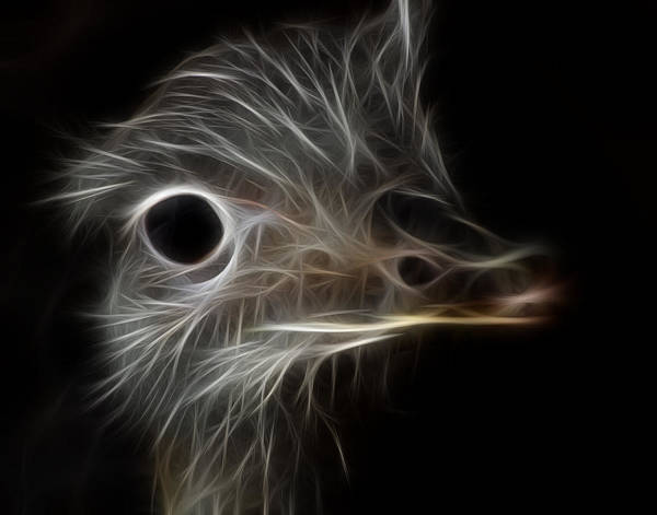 Photograph - Ostrich Fractalius by Maggy Marsh