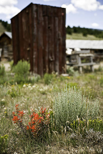 Photograph - Outhouse Path by Melany Sarafis
