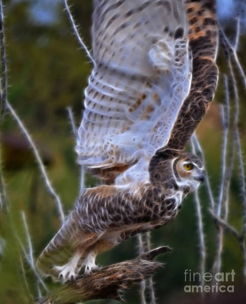 Photograph - Owl Fractal by Donna Greene