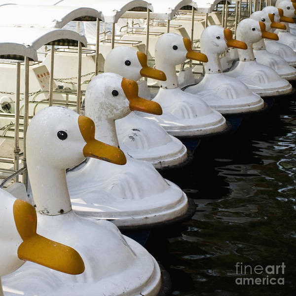 Swan Boats Photograph - Paddle Boats With Swan Heads At Beihai Park by Sam Bloomberg-rissman