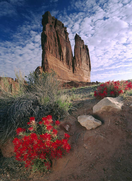 Photograph - Paintbrush And The Organ Rock Arches by Tim Fitzharris