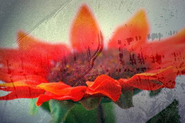 Photograph - Painted Flower by Mark  Ross