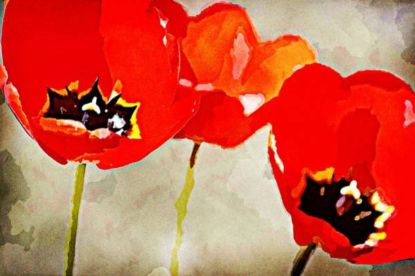 Wall Art - Photograph - Painted Red Tulip Flowers Art by P S