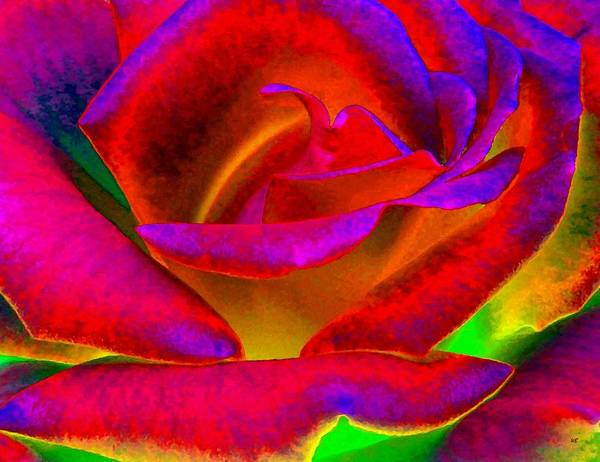 Purple Rose Digital Art - Painted Rose 1 by Will Borden
