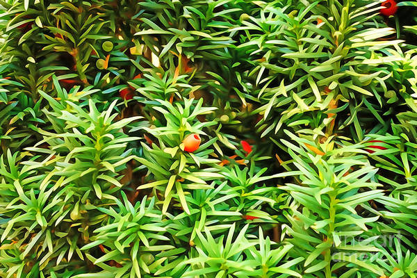 Photograph - Painterly Foliage Yew by Lutz Baar