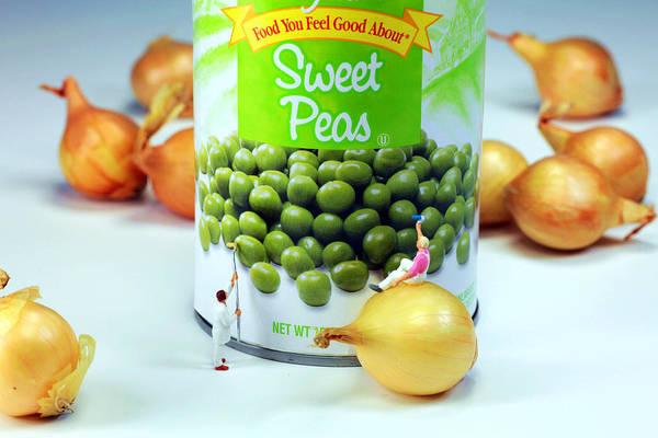 Pea Digital Art - Painting Sweet Peas Poster by Paul Ge