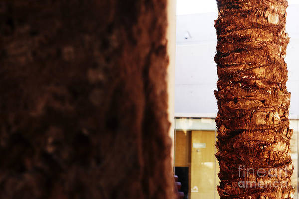 Photograph - Palm And Wall by Agusti Pardo Rossello