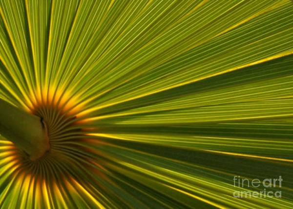 Photograph - Palm Fron by Sabrina L Ryan