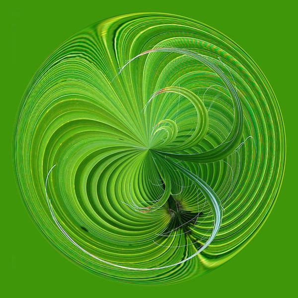 Photograph - Palm Frond Orb by Bill Barber