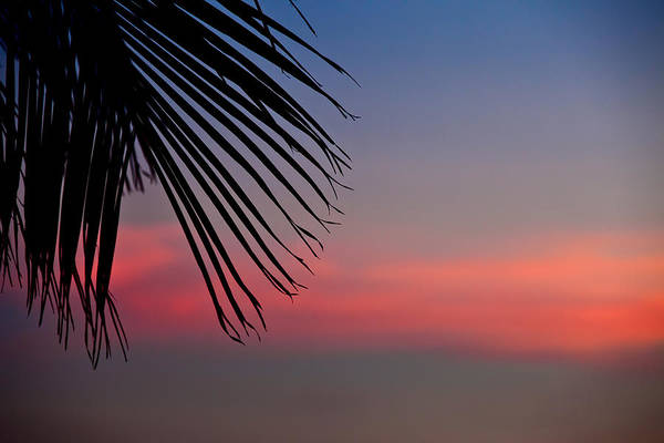 Wall Art - Photograph - Palm Leaf At Sunset by Anya Brewley schultheiss