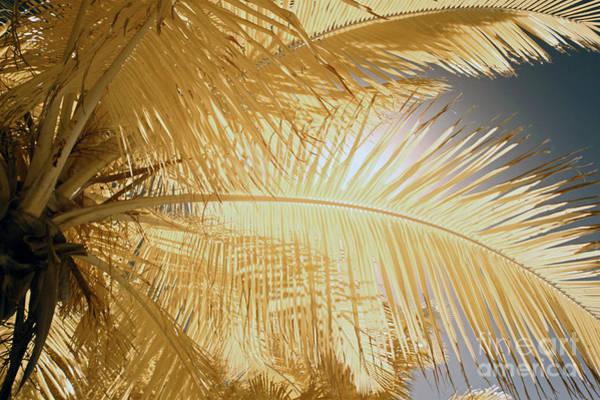 Bahia Honda Photograph - Palm Leaf by Keith Kapple