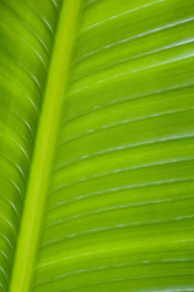 Wall Art - Photograph - Palm Pattern by Joe Carini - Printscapes