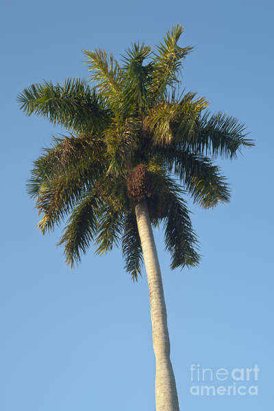 Wall Art - Photograph - Palm Tree by Blink Images