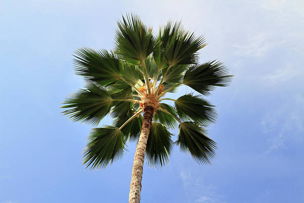 Photograph - Palm Tree Maui by Pierre Leclerc Photography