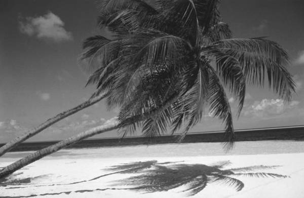 Coconut Trees Photograph - Palm Tree Shadow On Sand by Anonymous