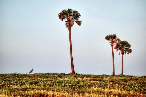 Digital Art - Palm Trees And Heron by Michael Thomas
