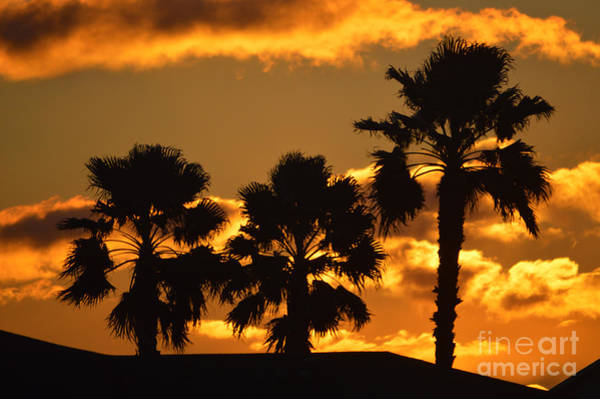 Photograph - Palm Trees In Sunrise by Susanne Van Hulst